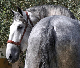 La compra de tu primer caballo